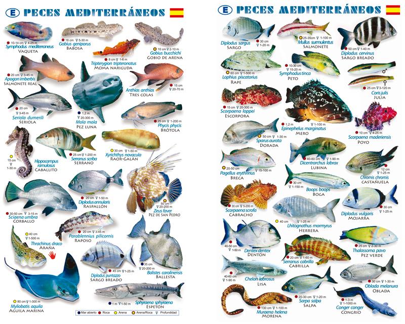 Tablilla peces mar mediterraneo - Fotos de peces del mediterraneo ...